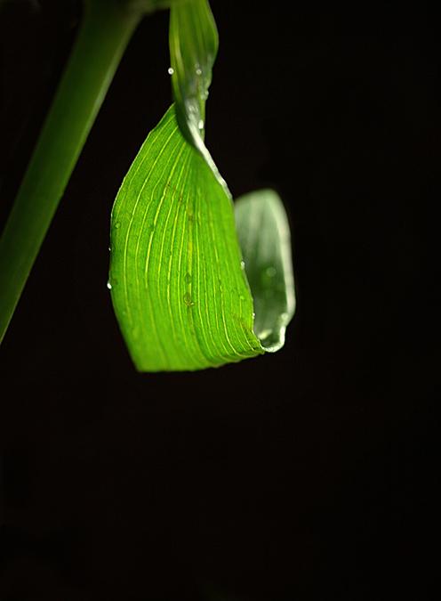 """photo """"s u r v i v i n g"""" tags: still life,"""