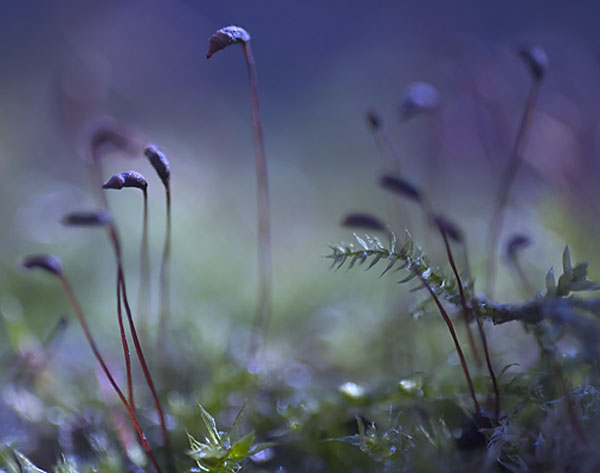 "photo ""Mysterious wood"" tags: macro and close-up, landscape,"