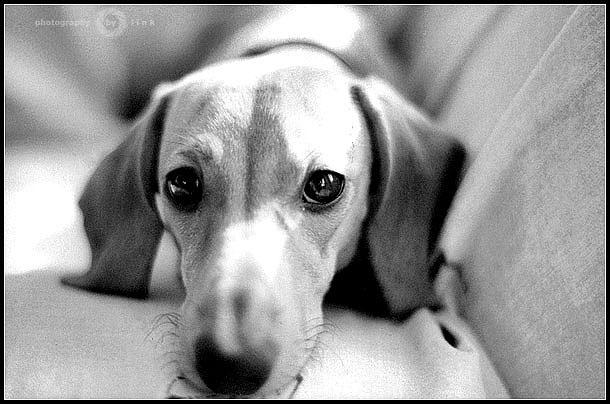 """photo """"***"""" tags: nature, portrait, pets/farm animals"""