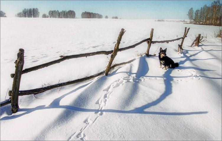 "photo ""***"" tags: genre, nature, pets/farm animals"