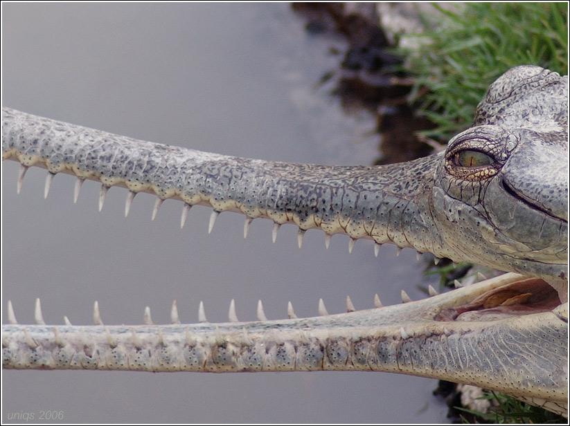 "photo ""Jurassic park theme"" tags: nature, wild animals"