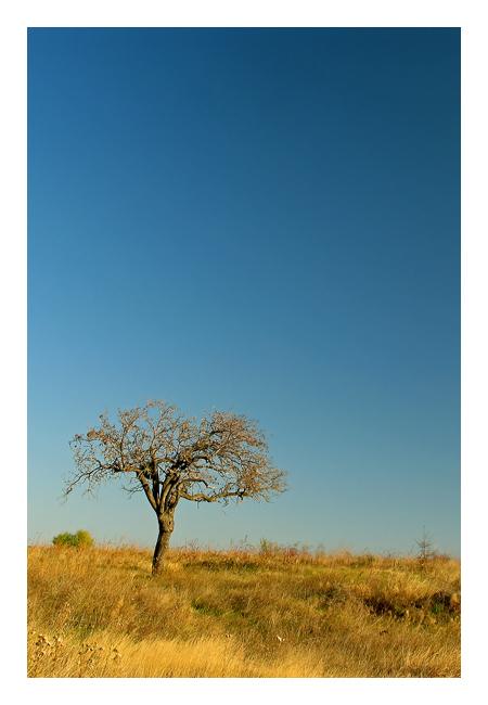 """фото """"*"""" метки: пейзаж, осень"""
