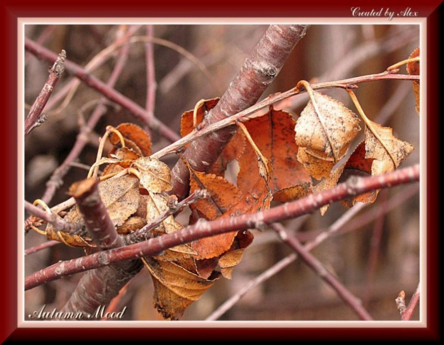 "photo ""Autumn Mood"" tags: macro and close-up, genre,"