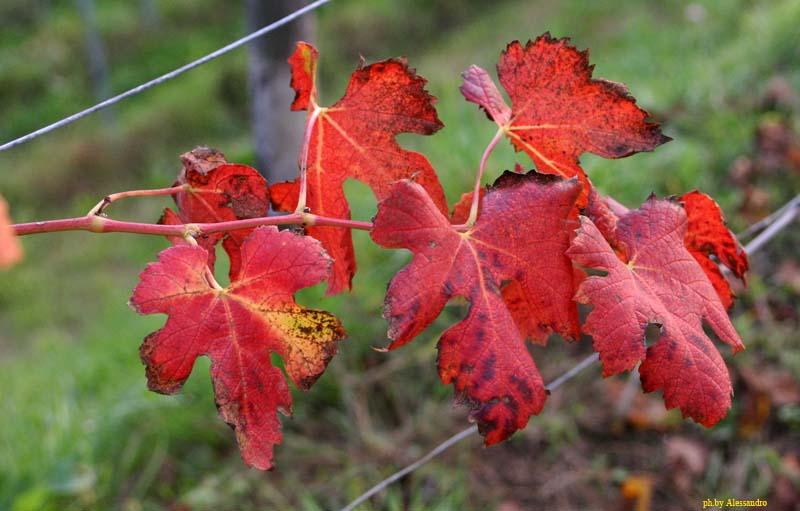 "photo ""foglie"" tags: nature, flowers"