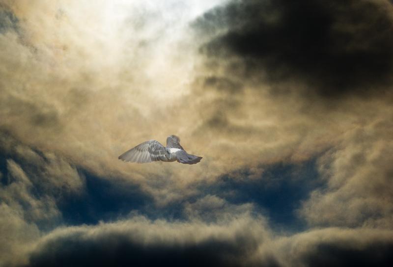 """фото """"Сон"""" метки: фотомонтаж, пейзаж, облака"""