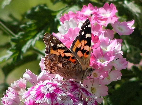 "фото ""Life is colorful"" метки: природа, цветы"