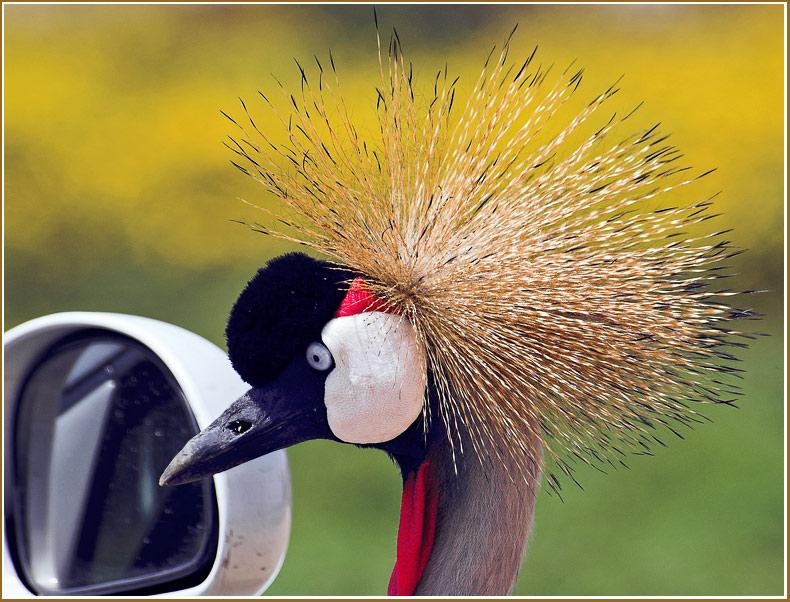 "photo ""Coquette"" tags: nature, wild animals"