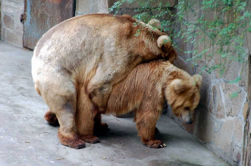 "photo ""Bear"" tags: nature, wild animals"