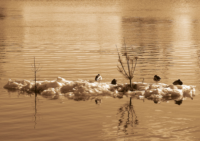"photo ""ducks & christmas-trees"" tags: landscape, black&white, water"