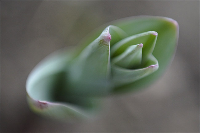 "photo ""the sprout"" tags: macro and close-up,"