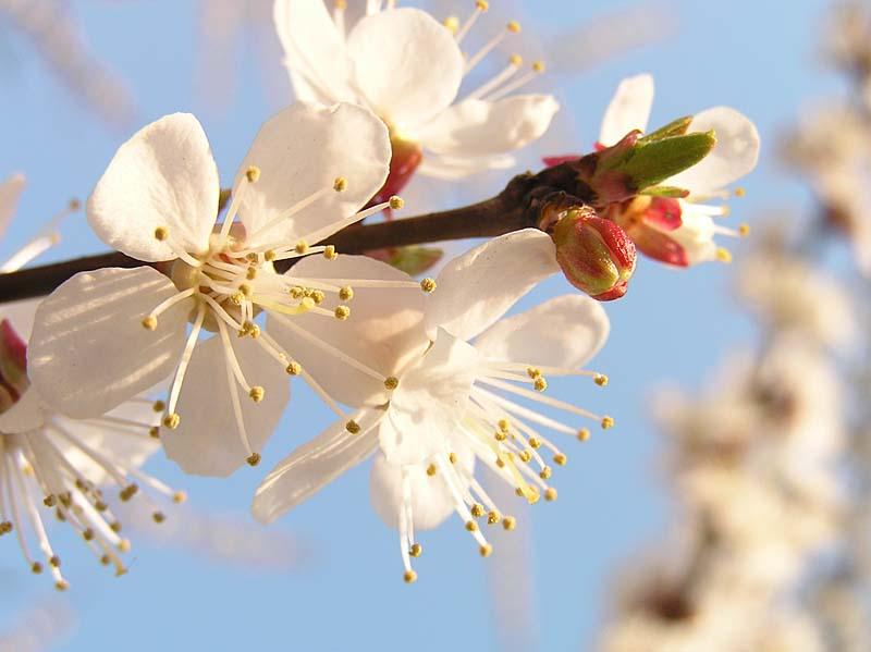 """фото """"kiev spring"""" метки: пейзаж,"""