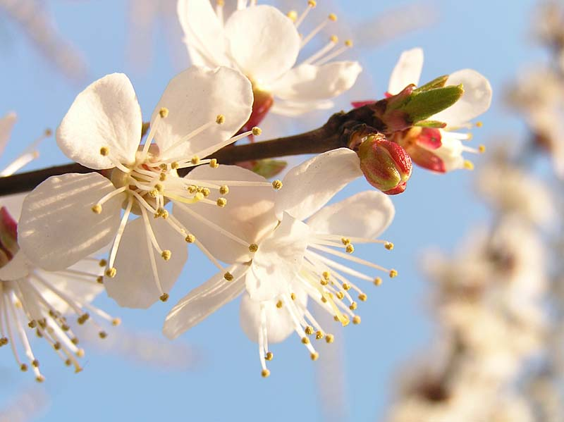"photo ""весна"" tags: landscape,"
