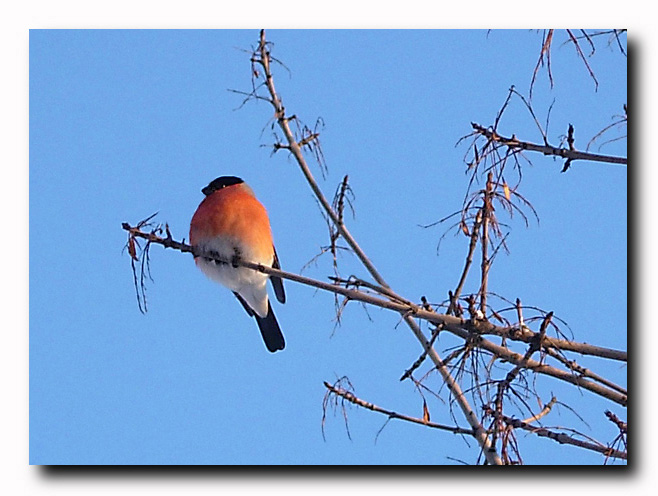 "photo ""Winter guest"" tags: nature, wild animals"