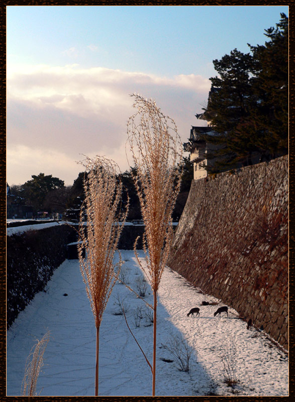 "photo ""In Nagoya castle"" tags: landscape, travel, Asia, winter"