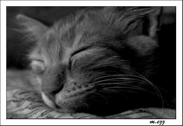 "photo ""deep sleep"" tags: portrait, nature, pets/farm animals"