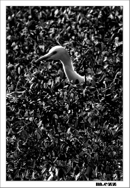 """фото """"Lonly Bird"""" метки: природа, черно-белые, дикие животные"""