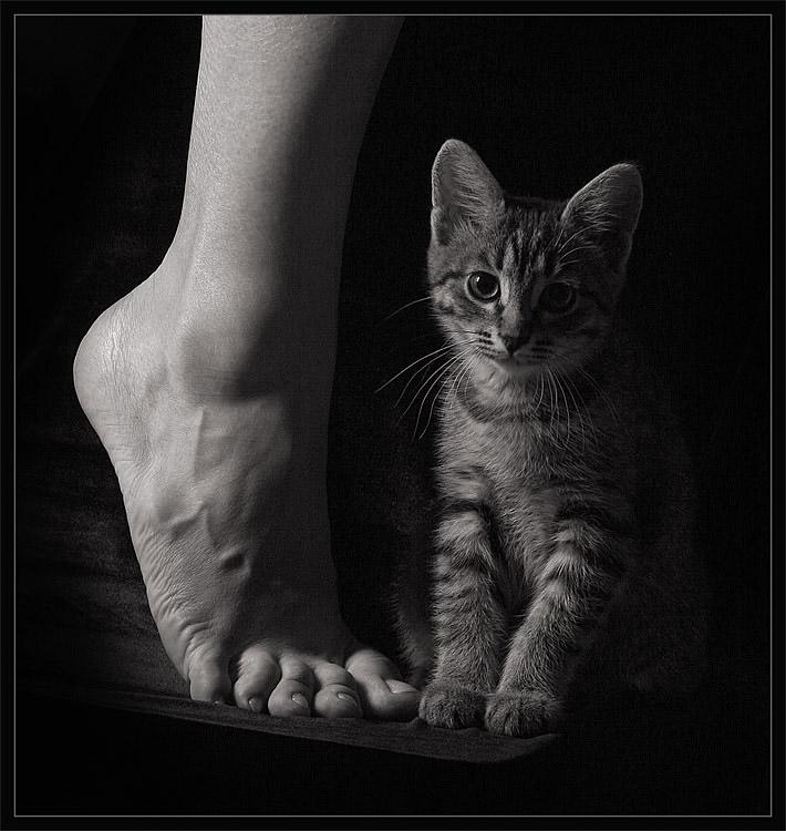 "photo ""Casual etude"" tags: black&white, nature, pets/farm animals"