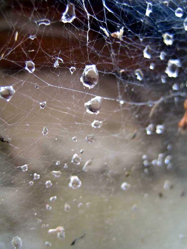 """фото """"rain"""" метки: макро и крупный план,"""