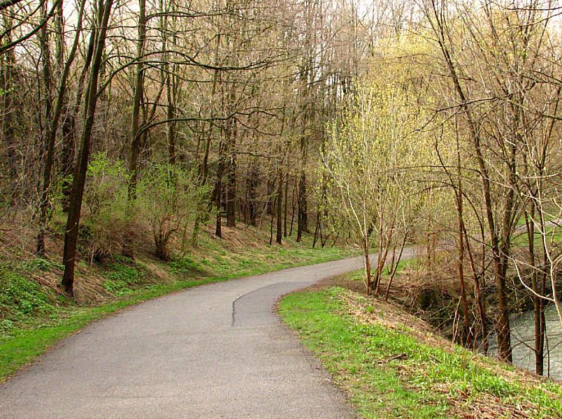 """photo """"golden spring"""" tags: landscape, forest, spring"""