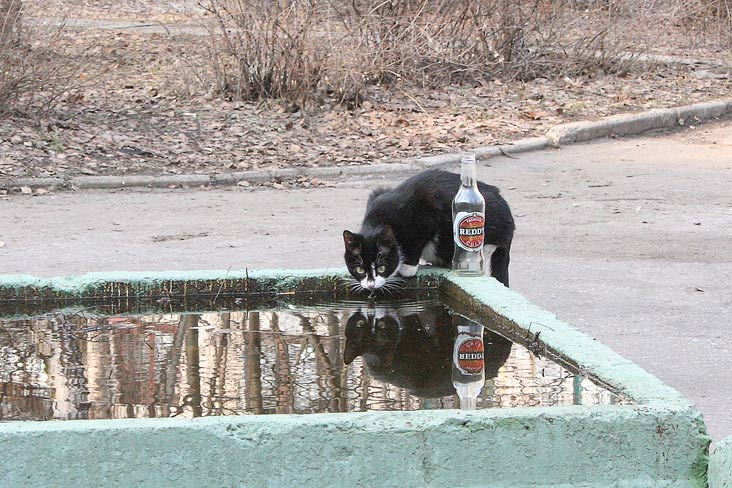 "photo ""***"" tags: humor, nature, pets/farm animals"