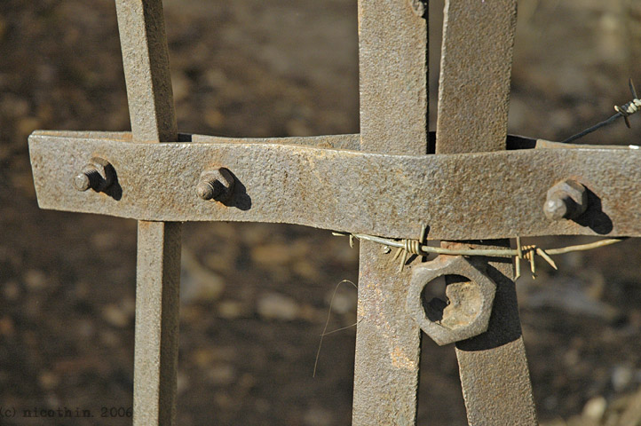 "photo ""Morning constraint"" tags: macro and close-up,"