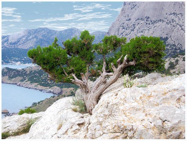 """photo """"Crimea landscape"""" tags: landscape, mountains, summer"""