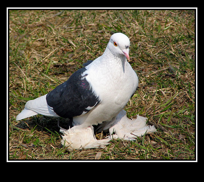 "photo ""And a sight - as at an eagle :)"" tags: nature, wild animals"