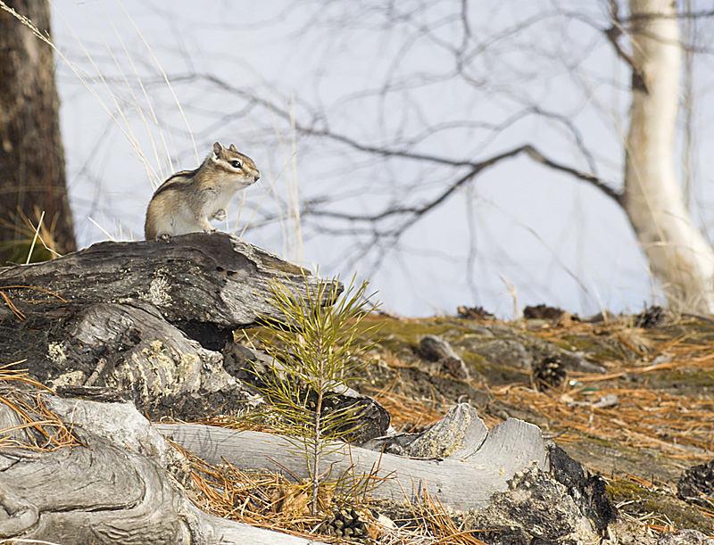 """фото """"Встречать весну"""" метки: природа, дикие животные"""