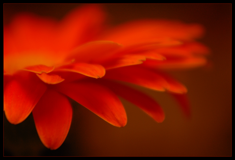 "photo ""gerbera"" tags: ,"