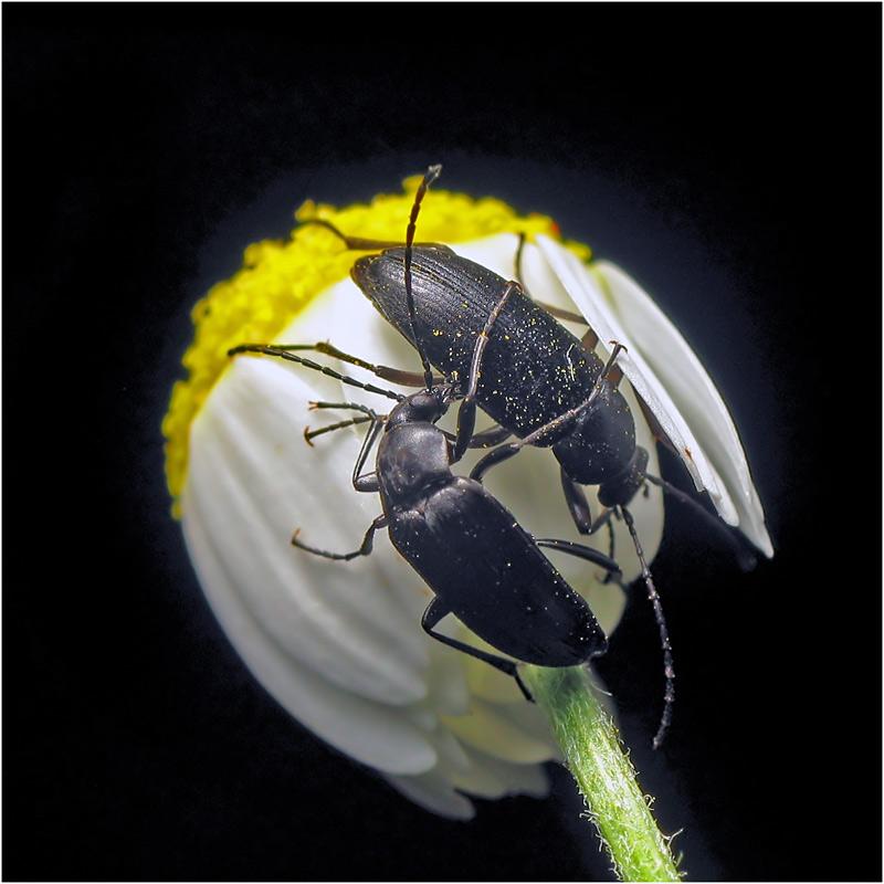 """фото """"***"""" метки: макро и крупный план, природа, насекомое"""