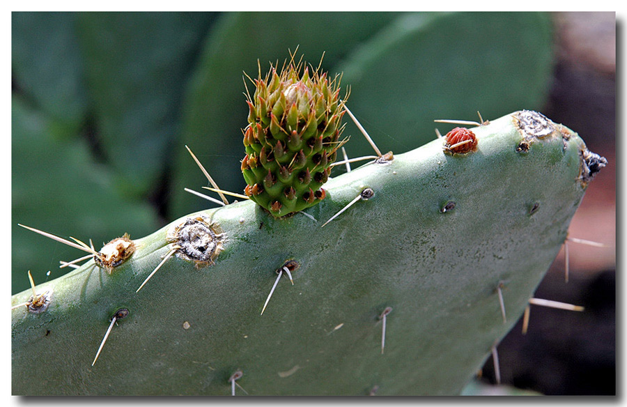 "photo ""Cactus maternity home"" tags: nature, macro and close-up, flowers"