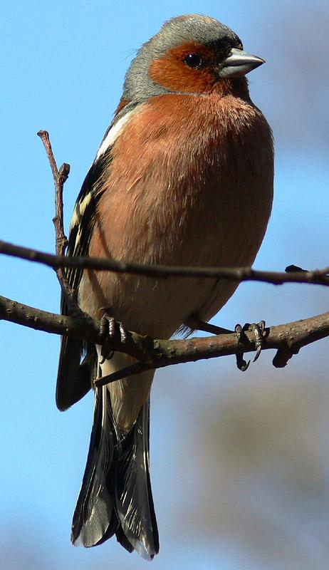 """photo """"Bird"""" tags: nature, wild animals"""