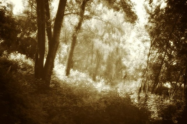 "photo ""Sunny wood"" tags: landscape, black&white, forest"