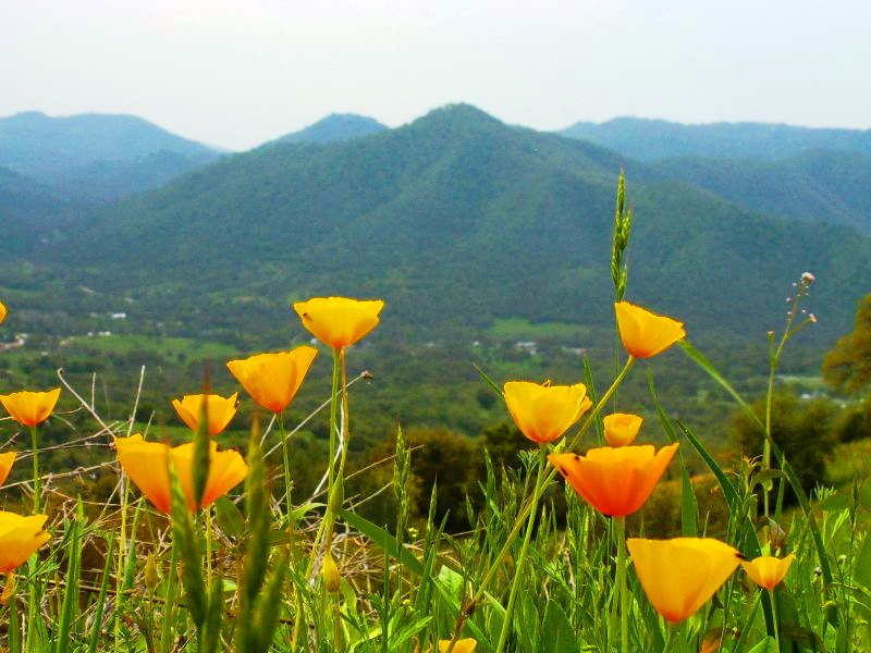 "photo ""Yellow flowers"" tags: landscape, mountains, spring"