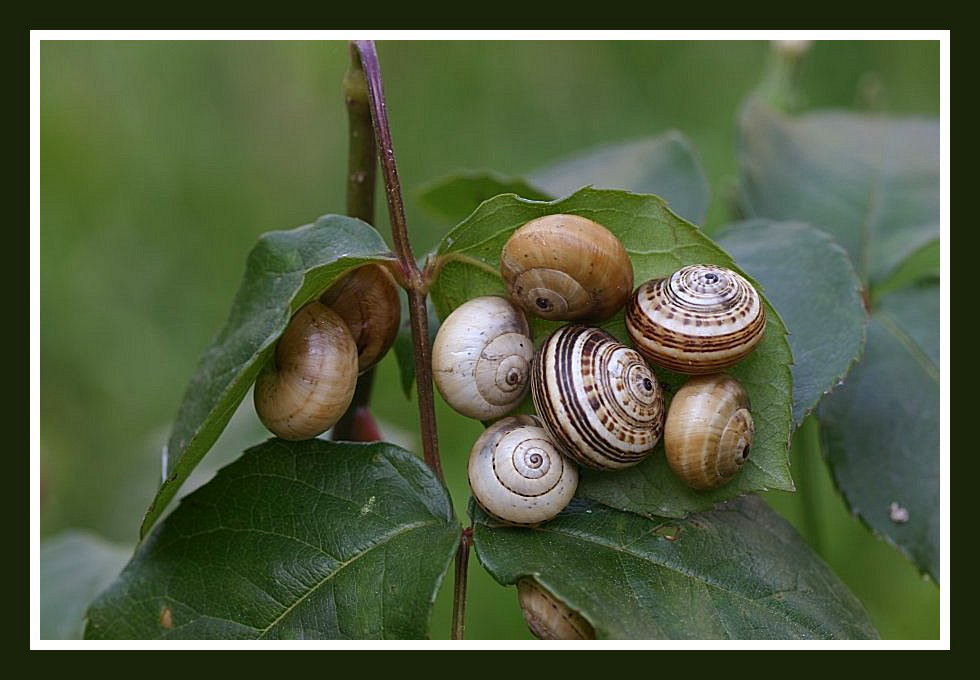"photo ""Snails colony"" tags: nature,"