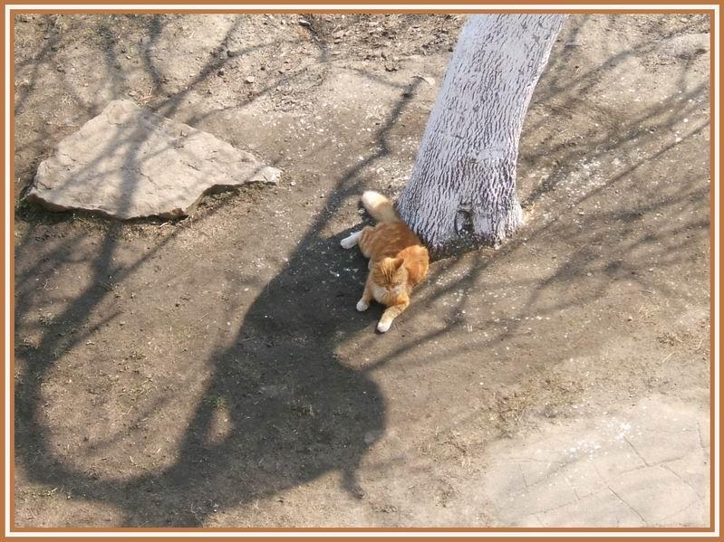 "photo ""***"" tags: nature, genre, pets/farm animals"