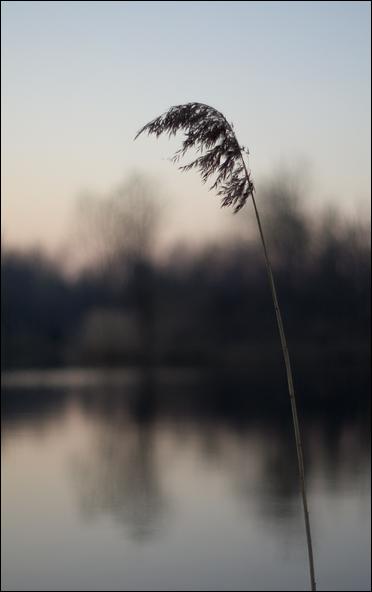 "photo ""Холодный весенний вечер"" tags: landscape, spring"