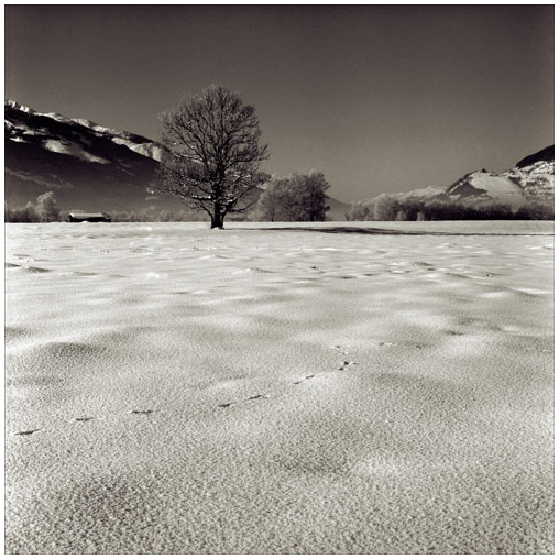 "photo ""Vorjaehrige Schnee"" tags: landscape,"