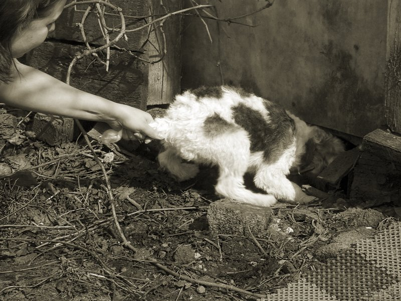 "photo ""Training of Burrow Dog"" tags: genre, humor,"