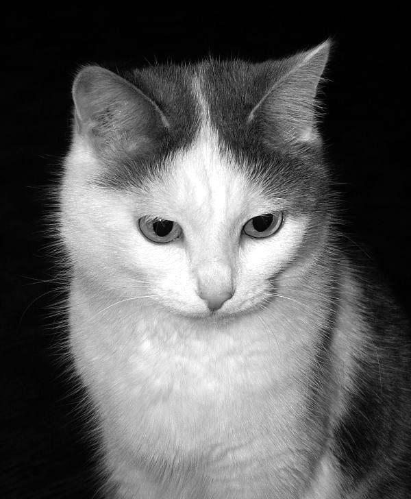 """photo """"***"""" tags: portrait, nature, pets/farm animals"""