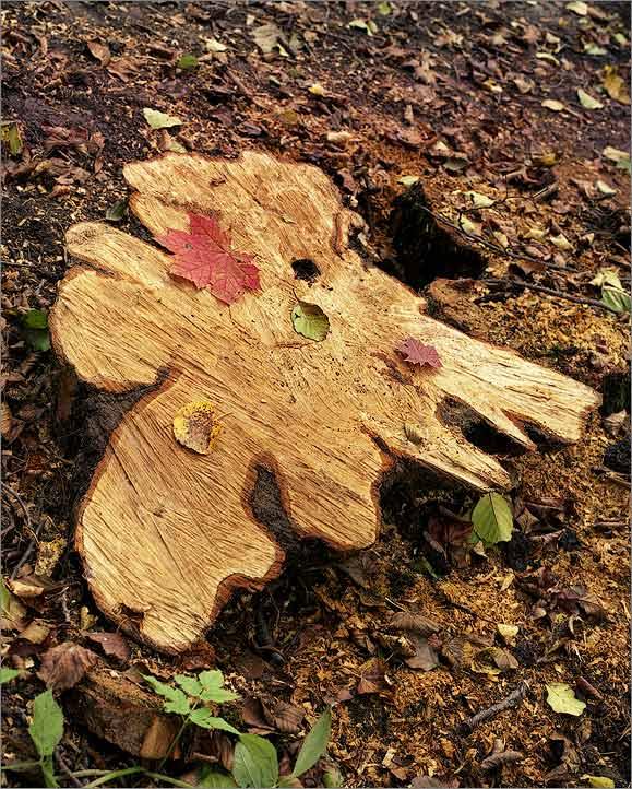 """фото """"Карта золотой осени"""" метки: пейзаж, природа, осень"""