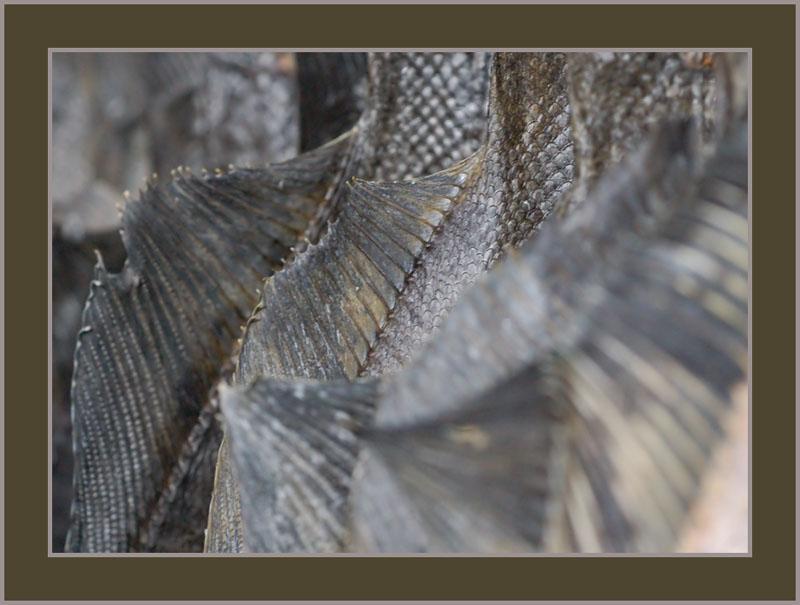 """фото """"Камбальное заграждение"""" метки: макро и крупный план, абстракция,"""