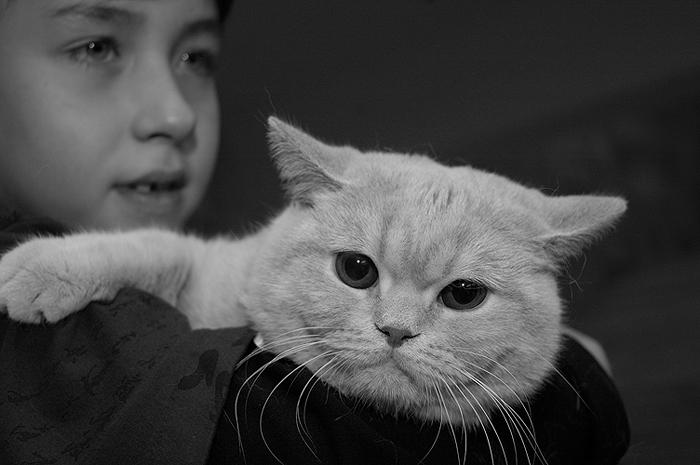 """фото """"Скука"""" метки: портрет, природа, домашние животные"""