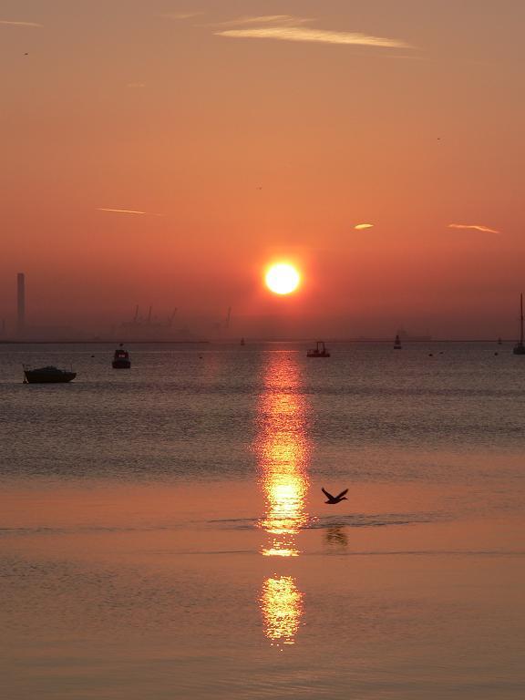 "photo ""Morning flight..."" tags: landscape, nature, sunset, wild animals"