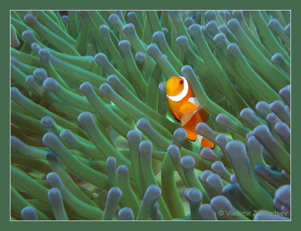 "photo ""Orange and green"" tags: underwater, macro and close-up,"