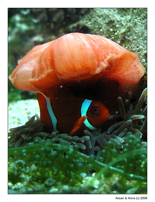 "photo ""Strange pair"" tags: underwater, nature, wild animals"