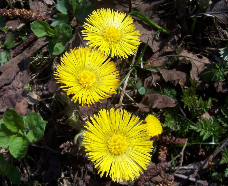 """фото """"первые цветы"""" метки: ,"""