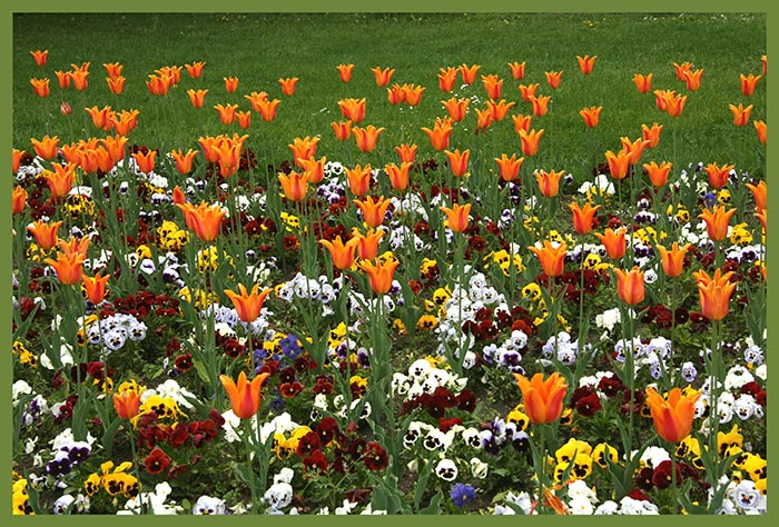 "photo ""flower bed"" tags: nature, flowers"