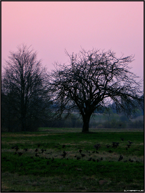 "photo ""***"" tags: landscape, nature, sunset"