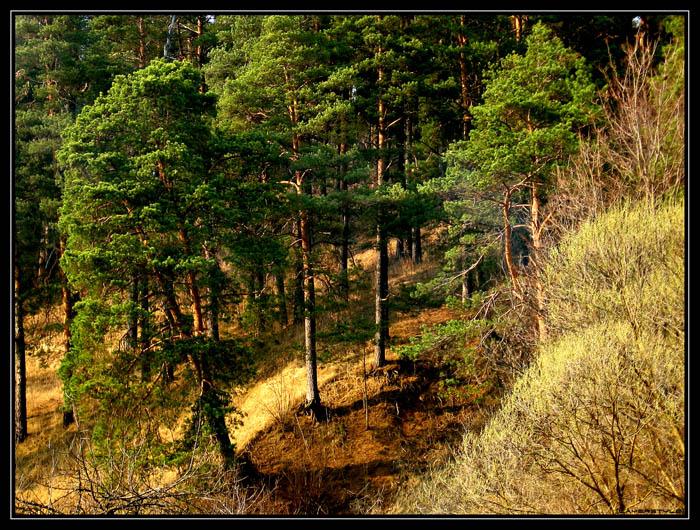 """фото """"На закате"""" метки: пейзаж, природа, закат"""